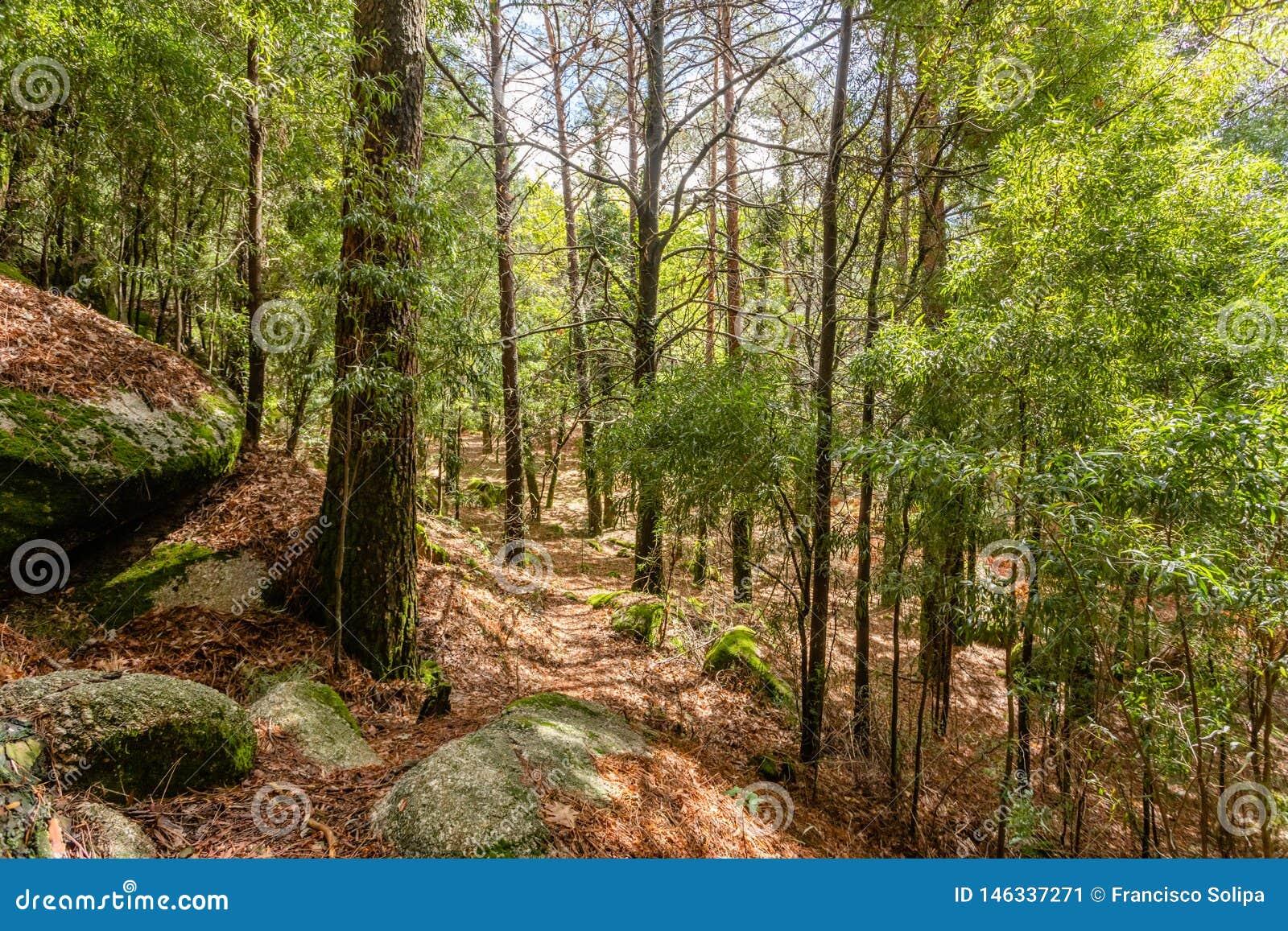 Ska?y zakrywa? zielonym mech w Peneda geres parka narodowego lesie, p??noc Portugalia