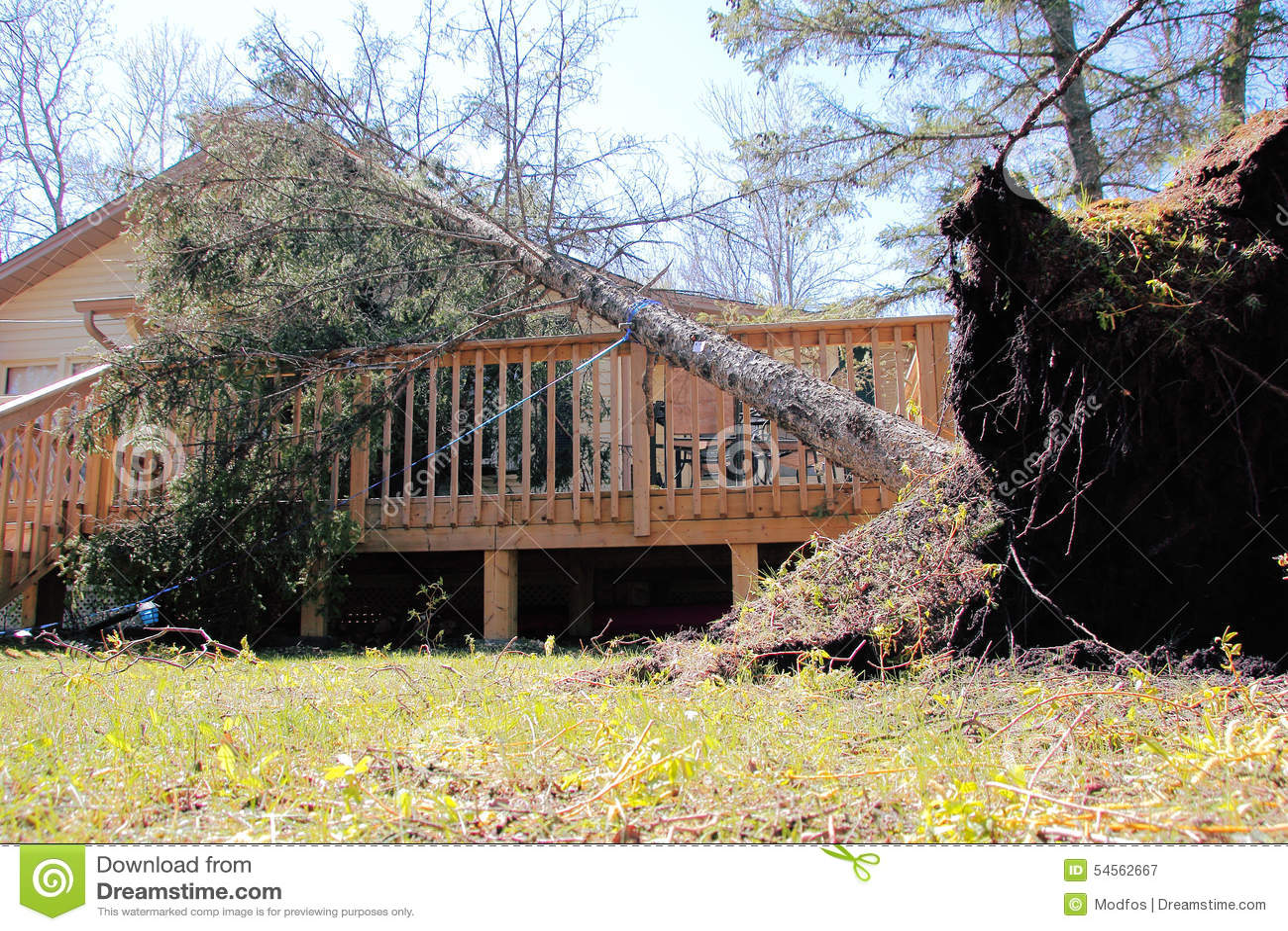 Skada fallna skogstormtrees