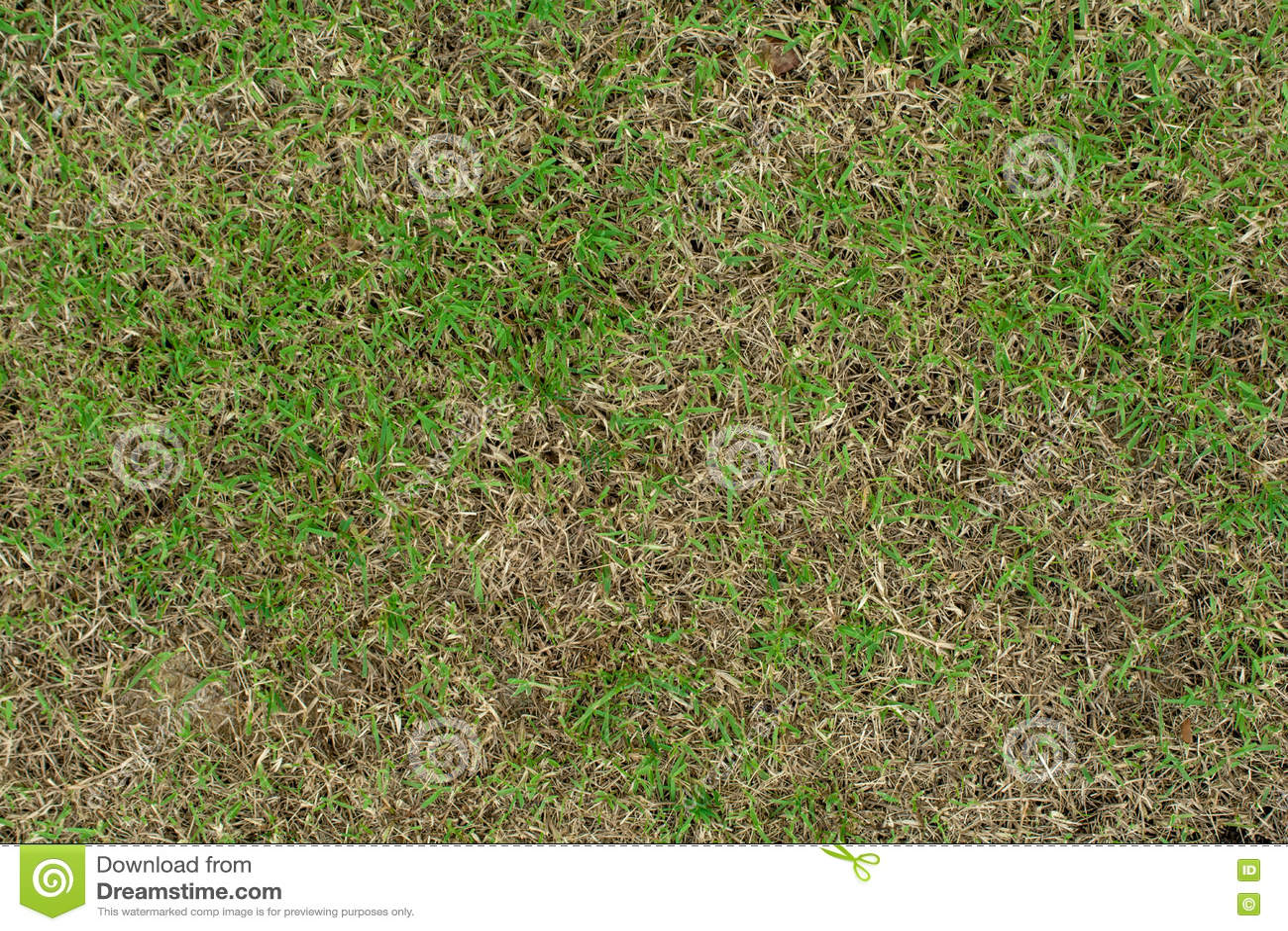 Skada till gröna gräsmattor