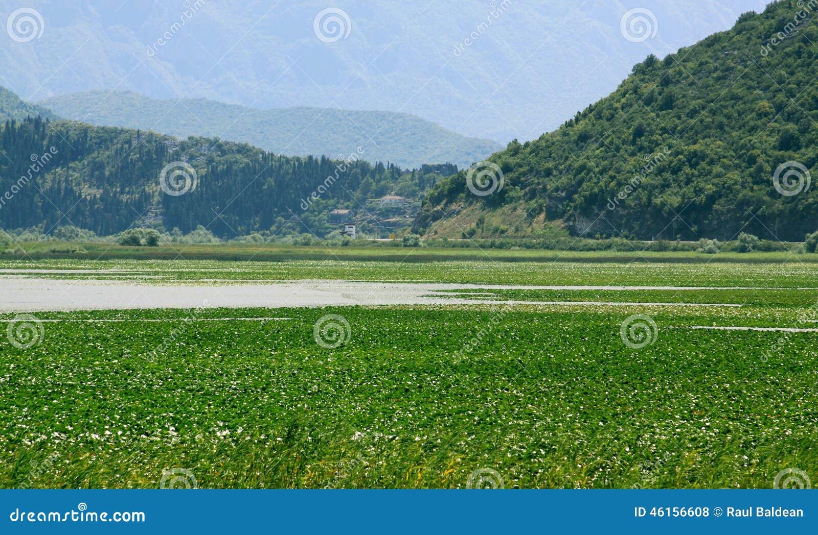 Skadarsko Jezero swamp landscape