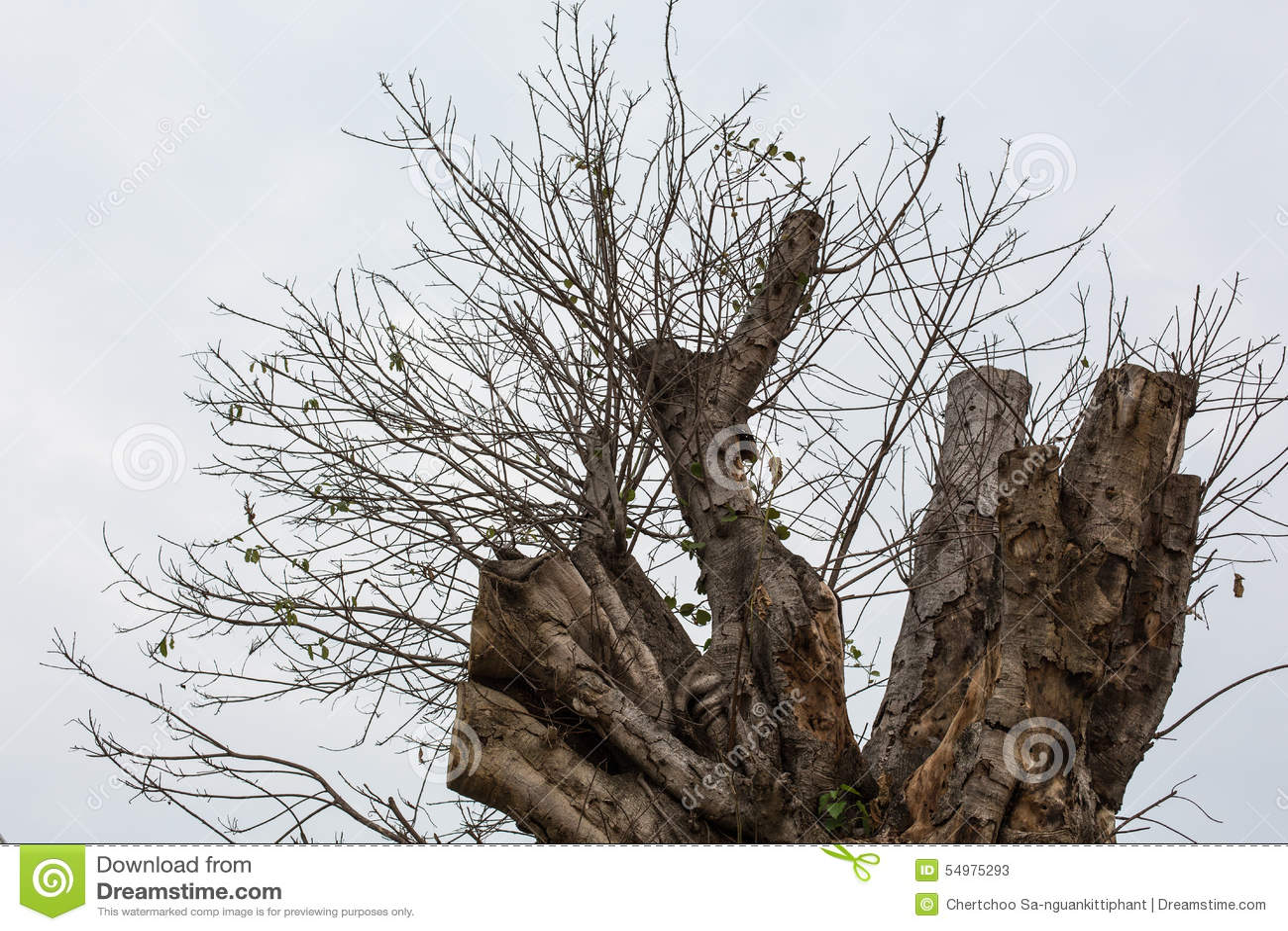 Skadeträd