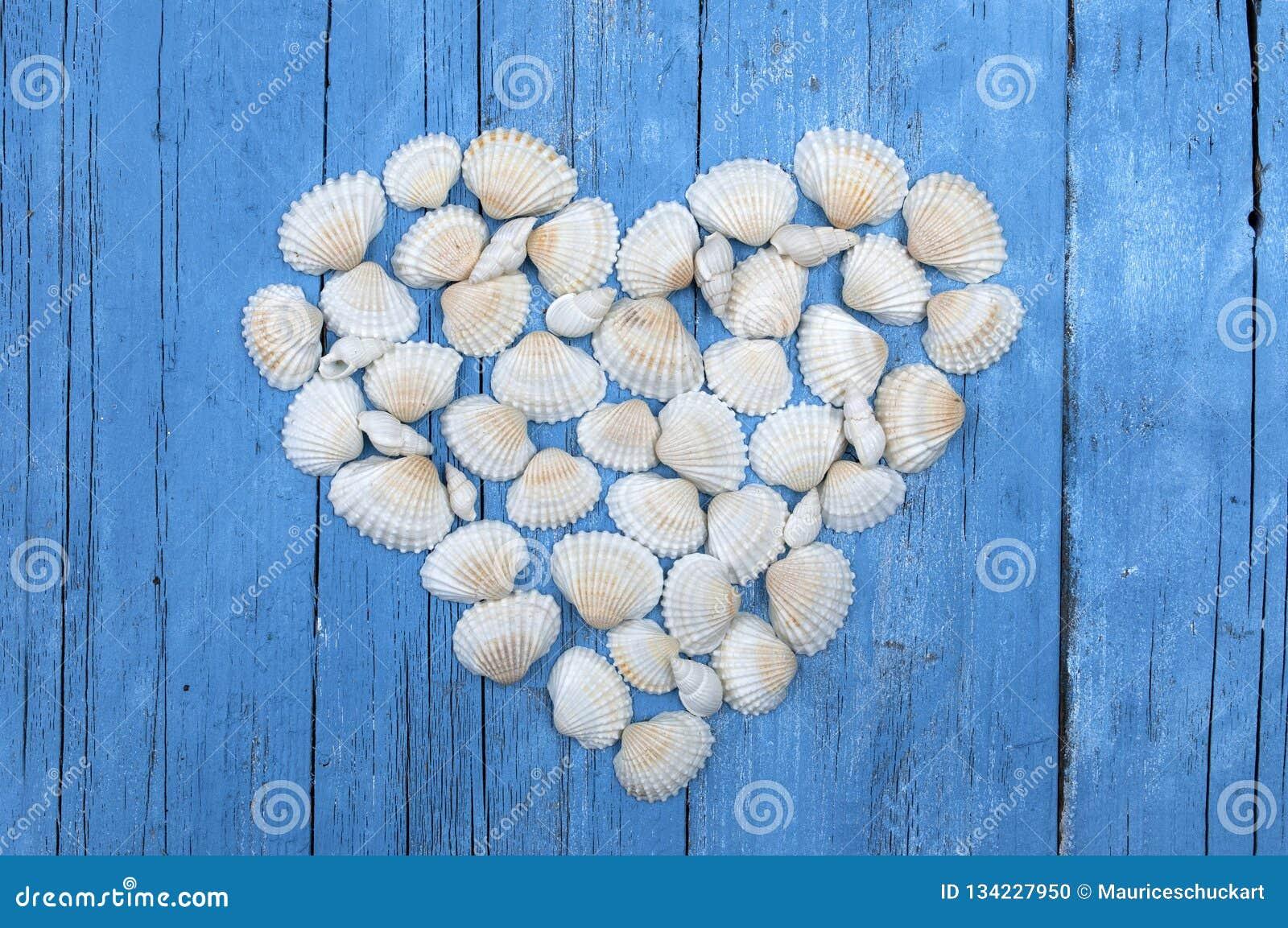 Skal för vitt hav som bildar en hjärta