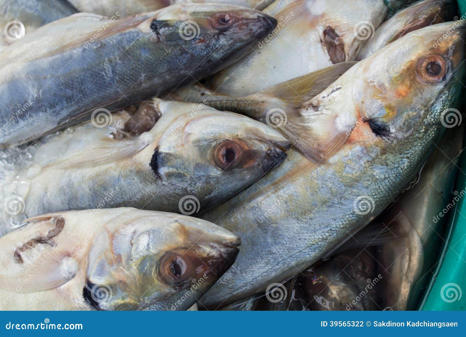 Skaldjur på fiskmarknaden