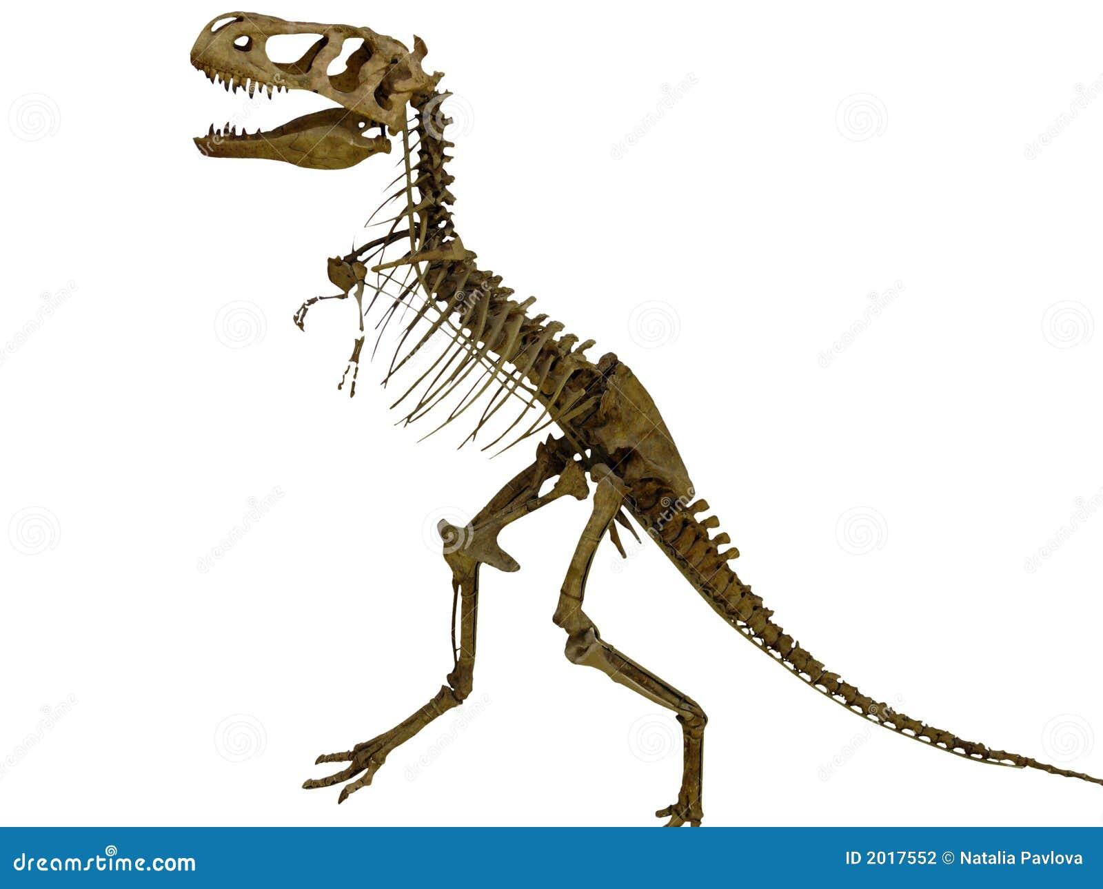 Skelet Van De Dinosaurus Stock Fotografie Afbeelding 2017552