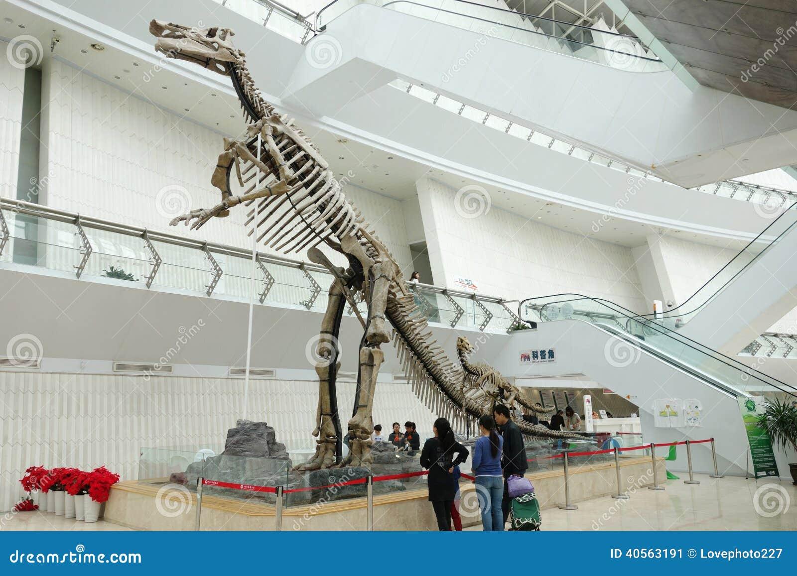 Skelet van dinosaurus