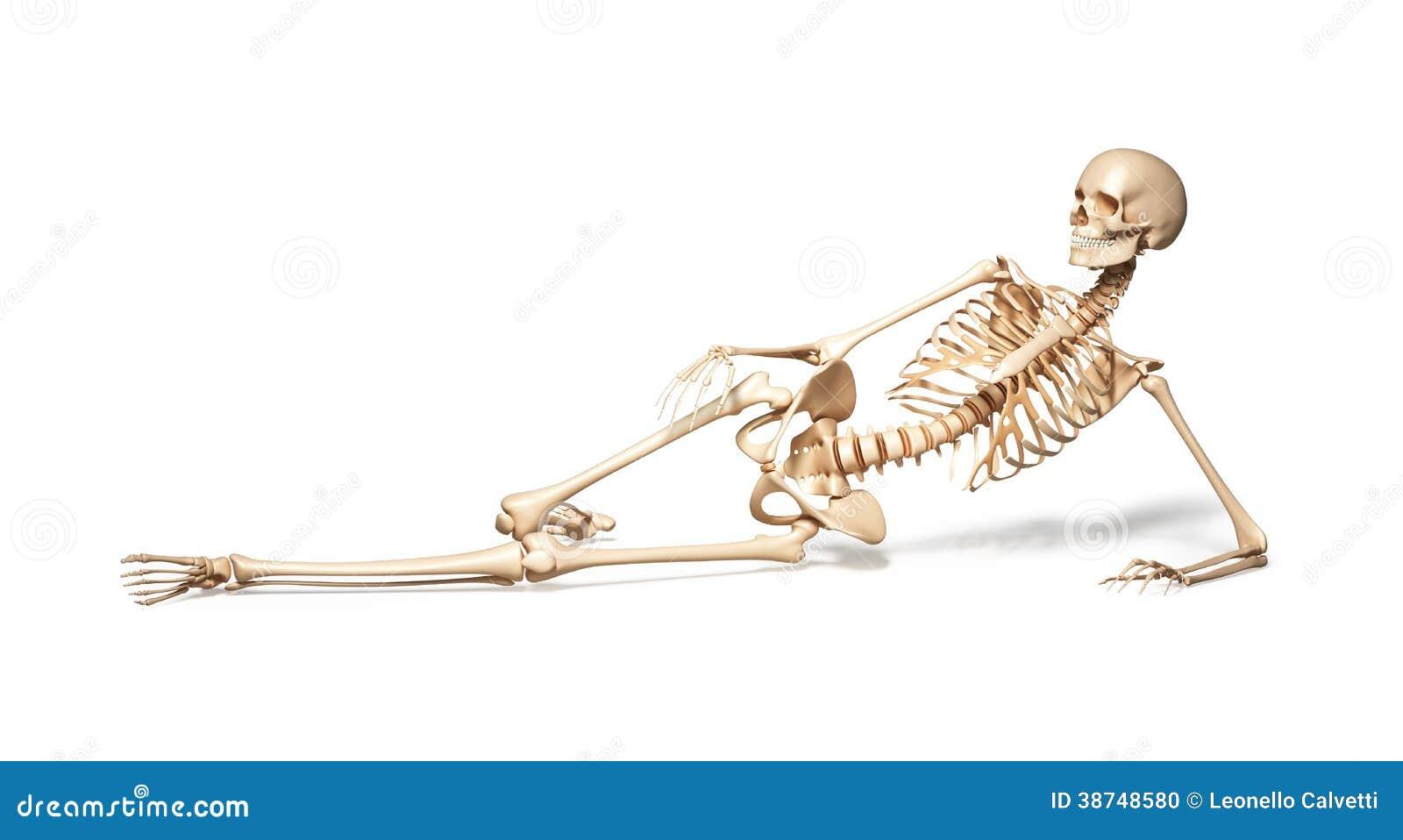 Skelet van menselijk wijfje die op vloer liggen.
