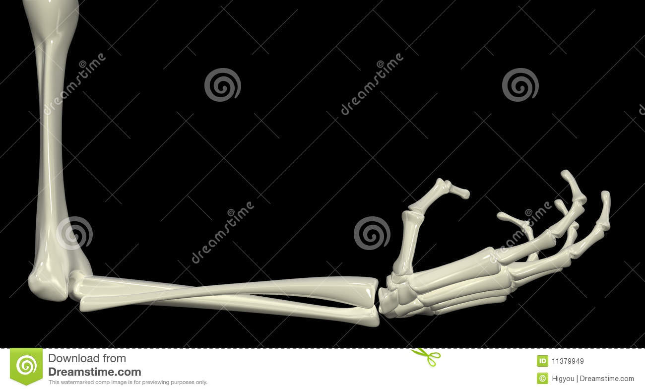 Right Angle Body : Skeletal arm right angle royalty free stock images