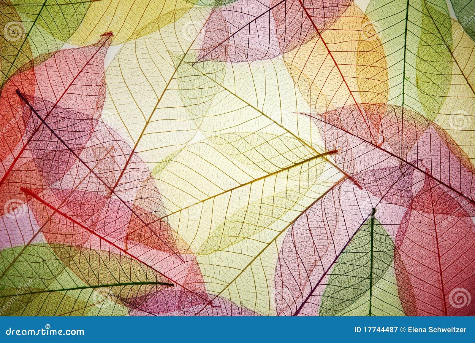 Skeleton Blätter