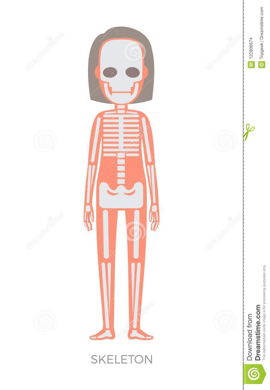 Skeleton Of Woman Anatomy Vector Illustration Stock Vector