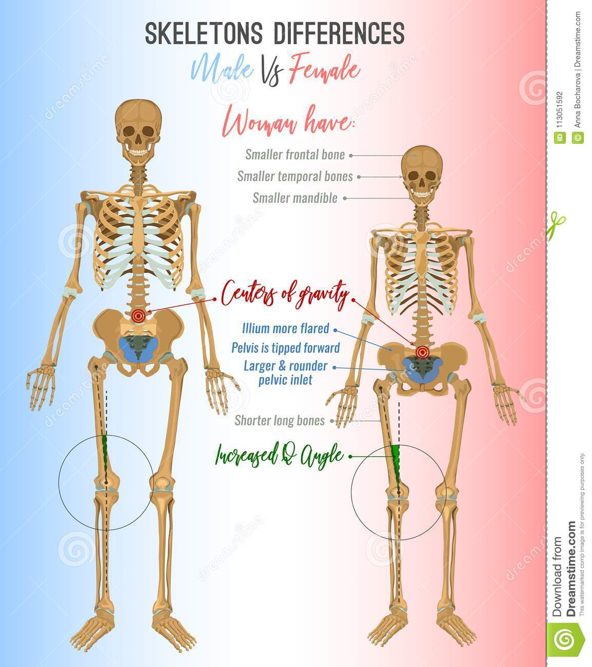 Skeleton differences image stock vector. Illustration of anatomy ...
