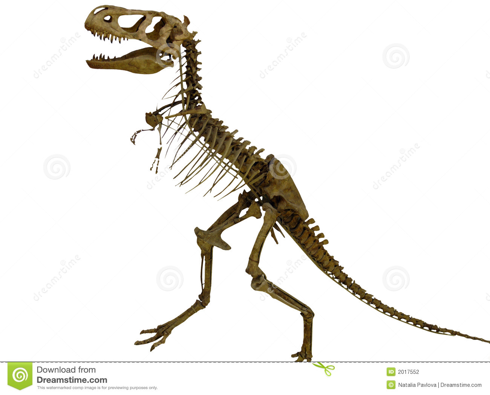 Skeleton Of The Dinosaur Stock Photo. Image Of Bite