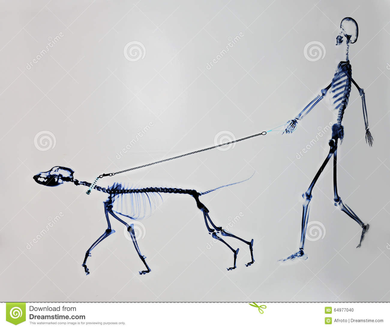 Download Skeleton of dog and man stock photo. Image of cure, scary - 64977040