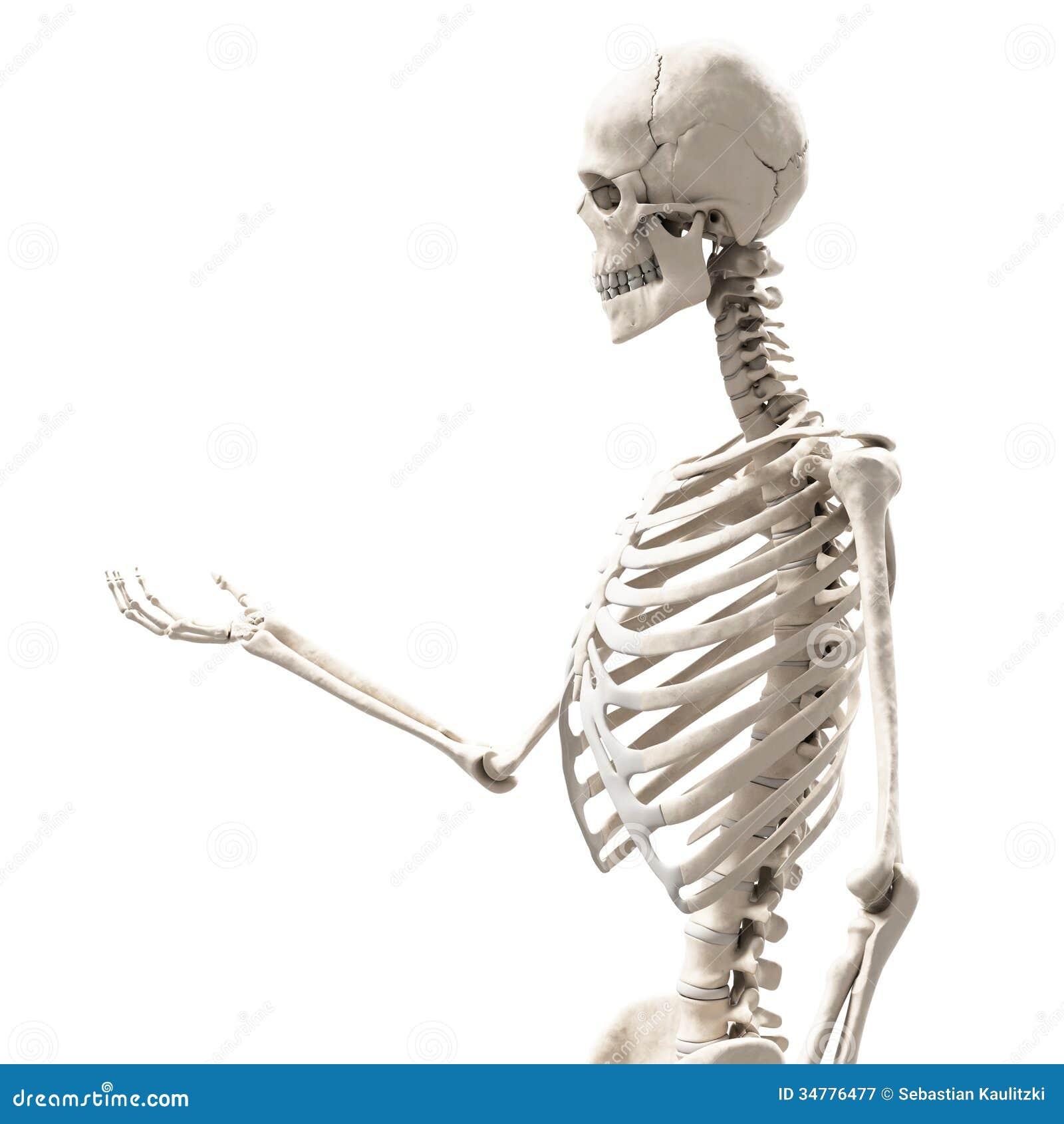 Human skeleton hand holding human skeleton hand holding photo4 ccuart Choice Image