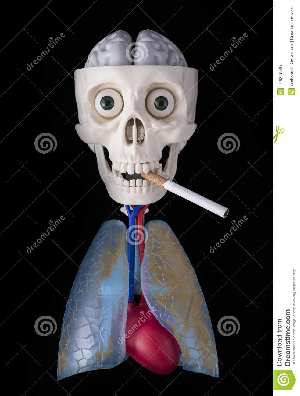 Skeleton, human skull in the teeth of a cigarette, dirty lung, heart and brain on a black background