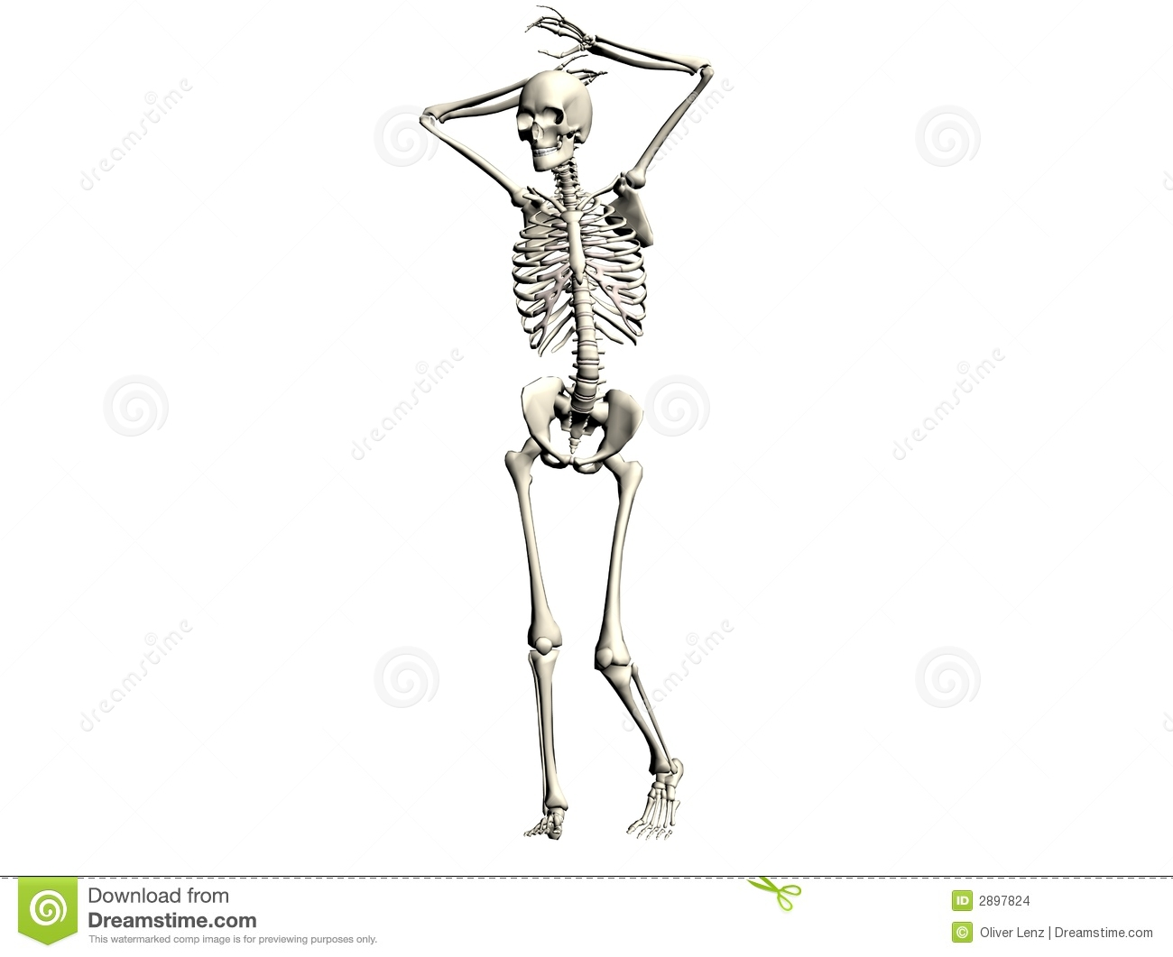 3D illustration of a skeleton, isolated on a white background. .