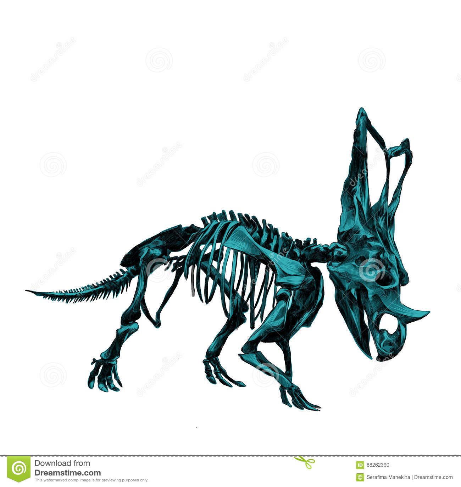 Skeleton inosaur Triceratop