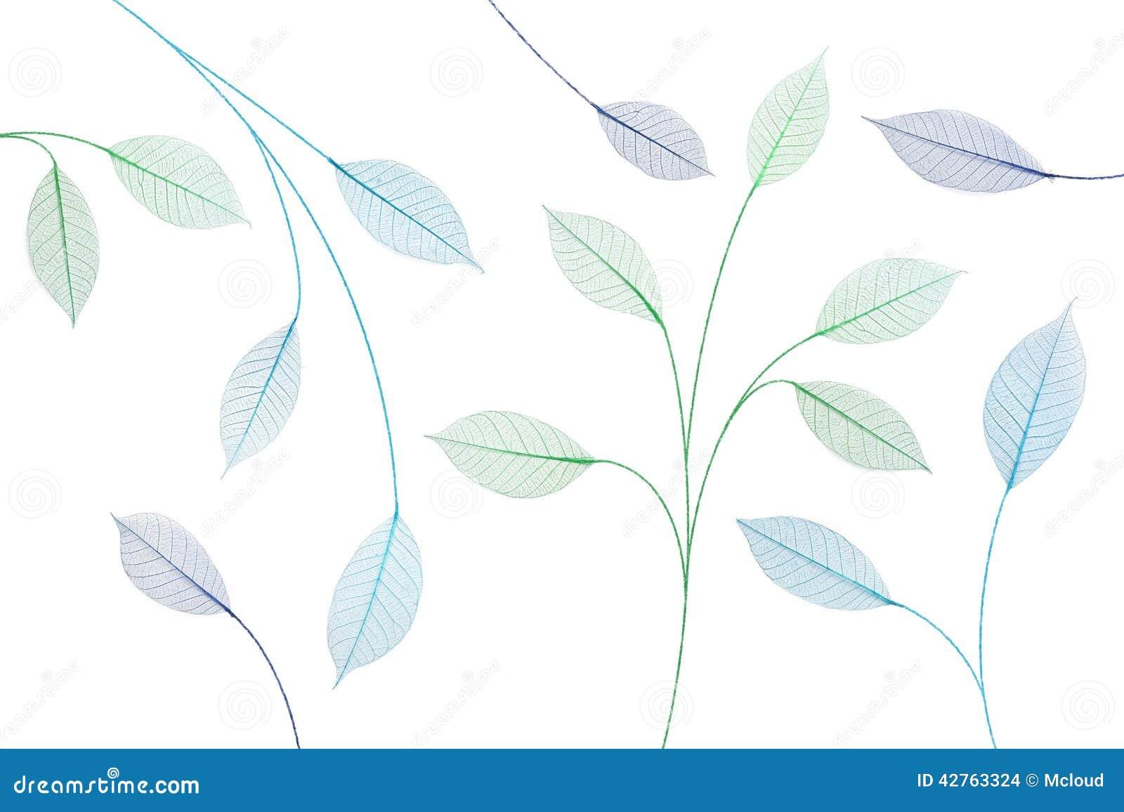 skeleton leaf abstract background stock illustration illustration
