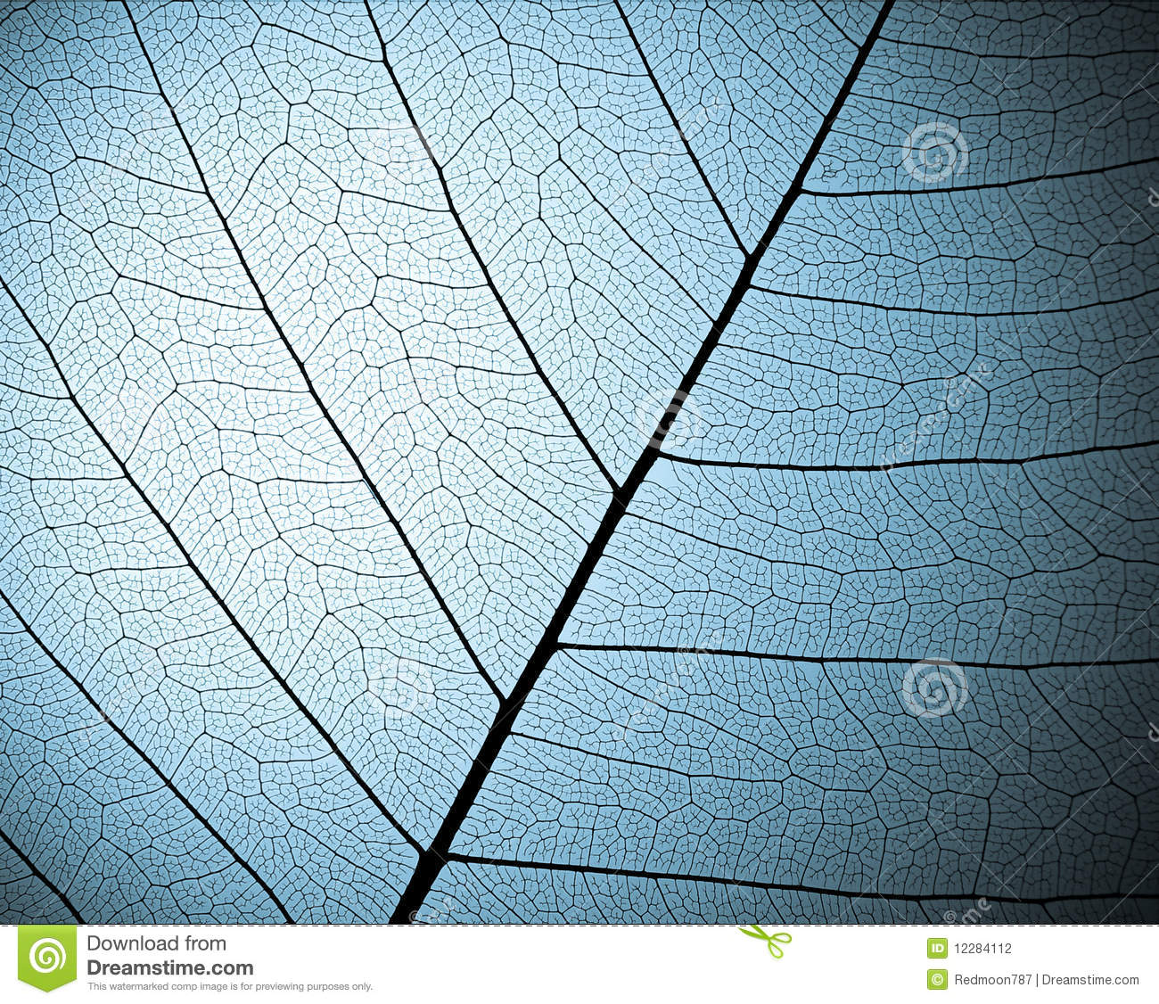 Skeleton leaf textured background close up