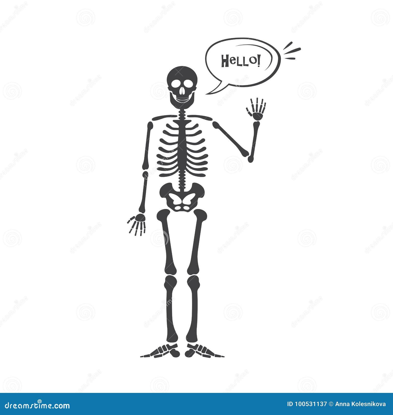 Skeleton Menschliche Anatomie Vektorhalloween-Schwarzskelett ...