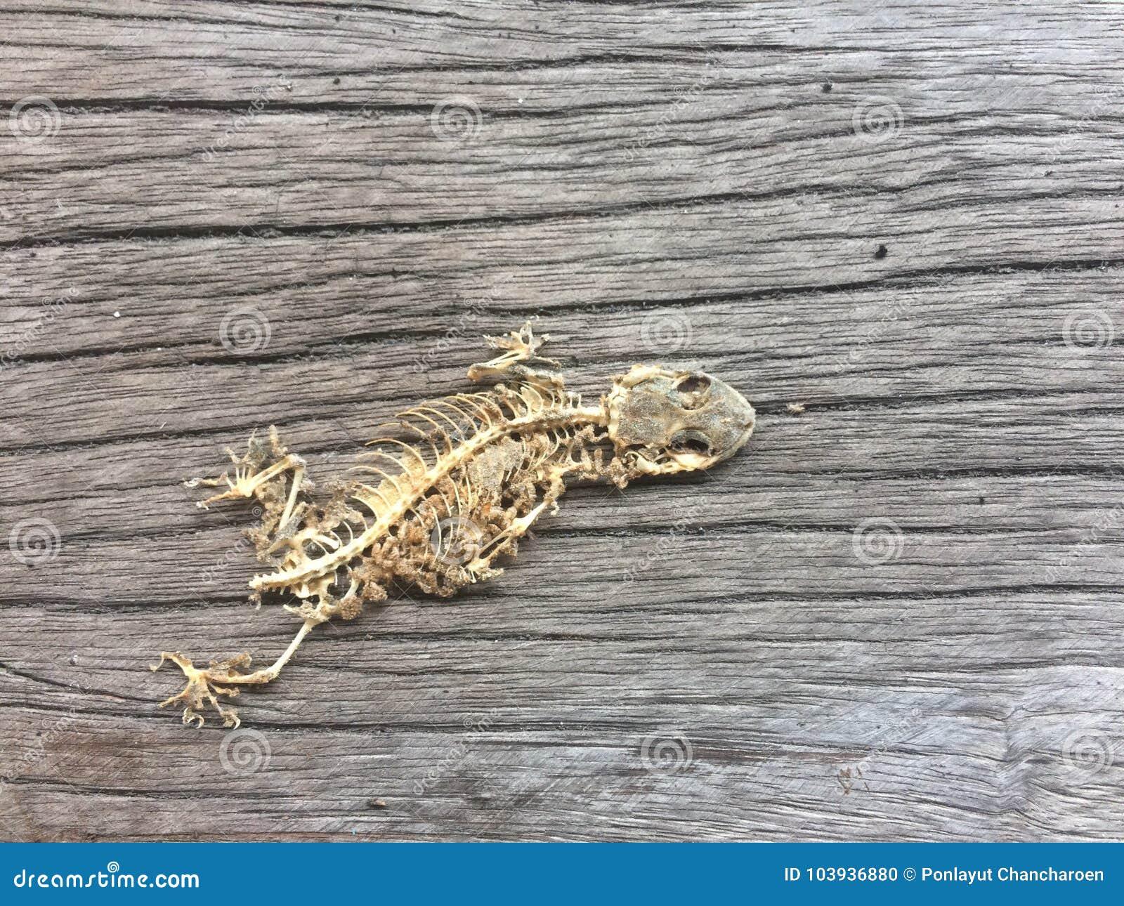 Skeleton of reptile stock photo  Image of ashes, bone