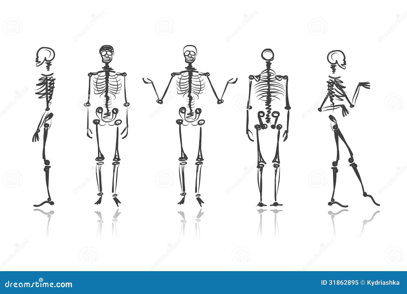 Vintage Anatomical Drawing Skeleton Sketches For ...