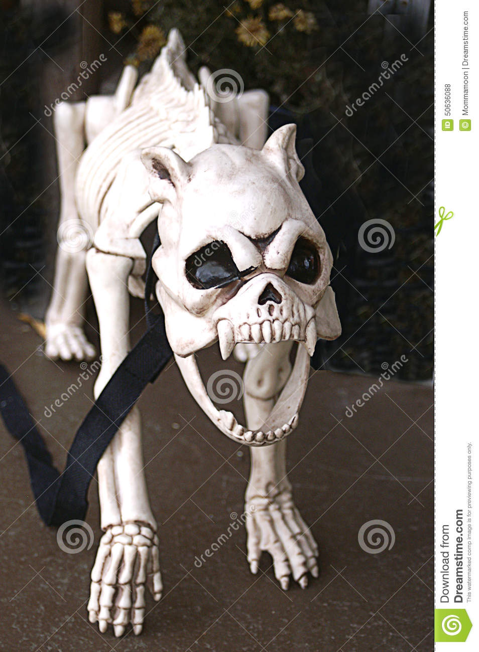 Skeleton of Snarling Dog