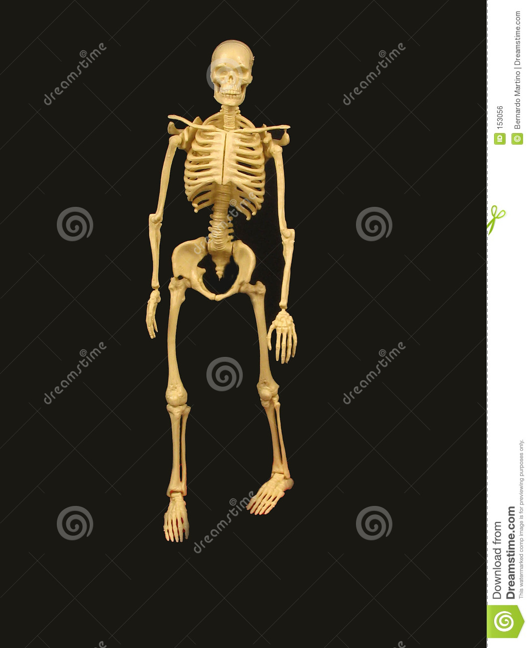 Skeleton without stand