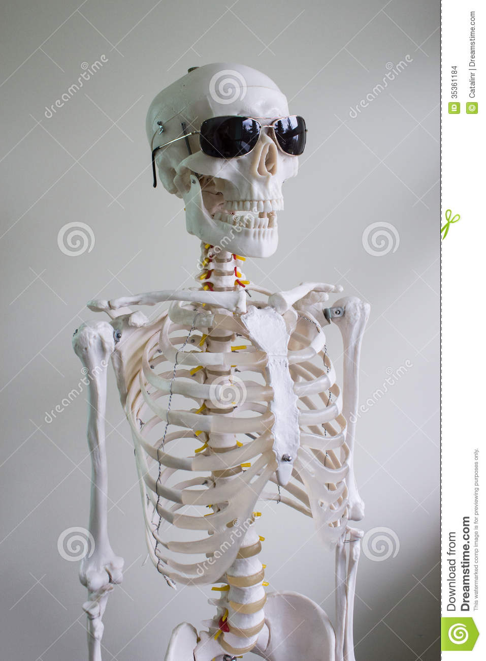 Cool spooky skeleton model wearing sunglasses on white background.