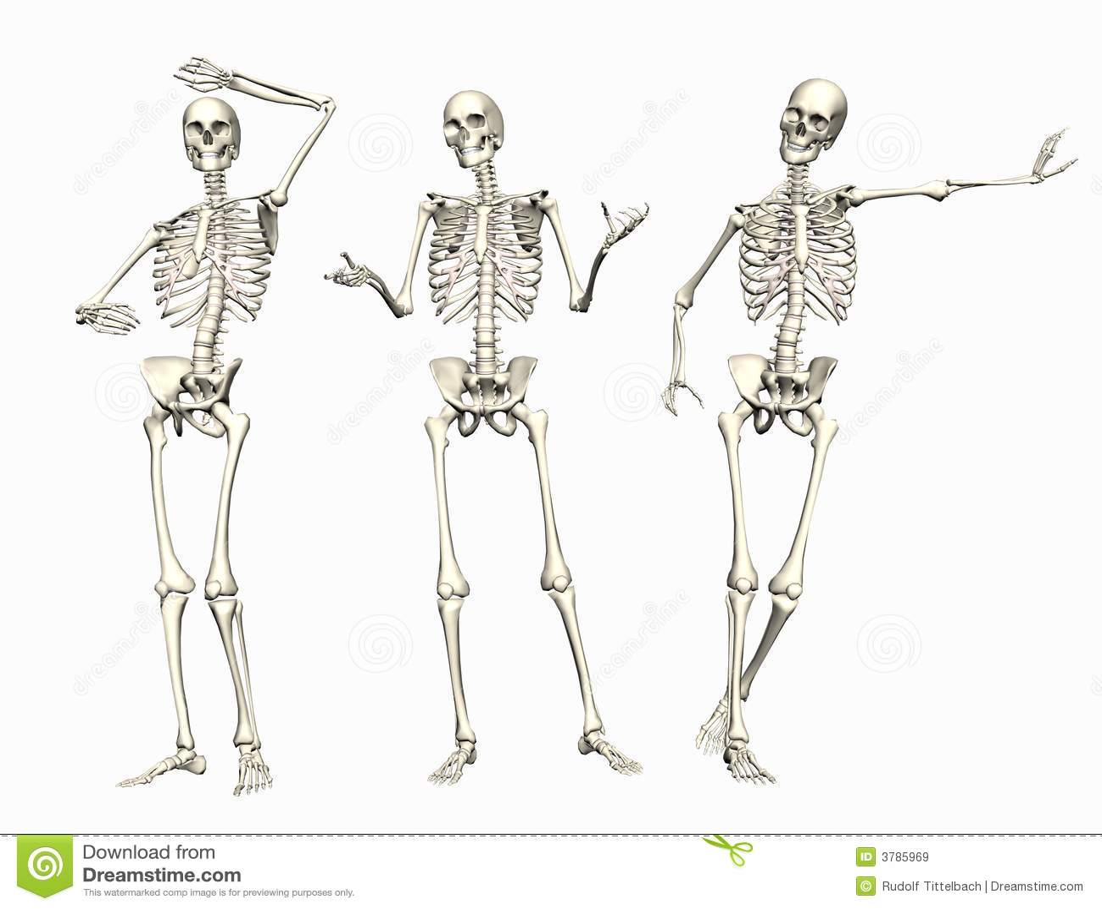 Skeletons stock illustration  Illustration of poses, posing