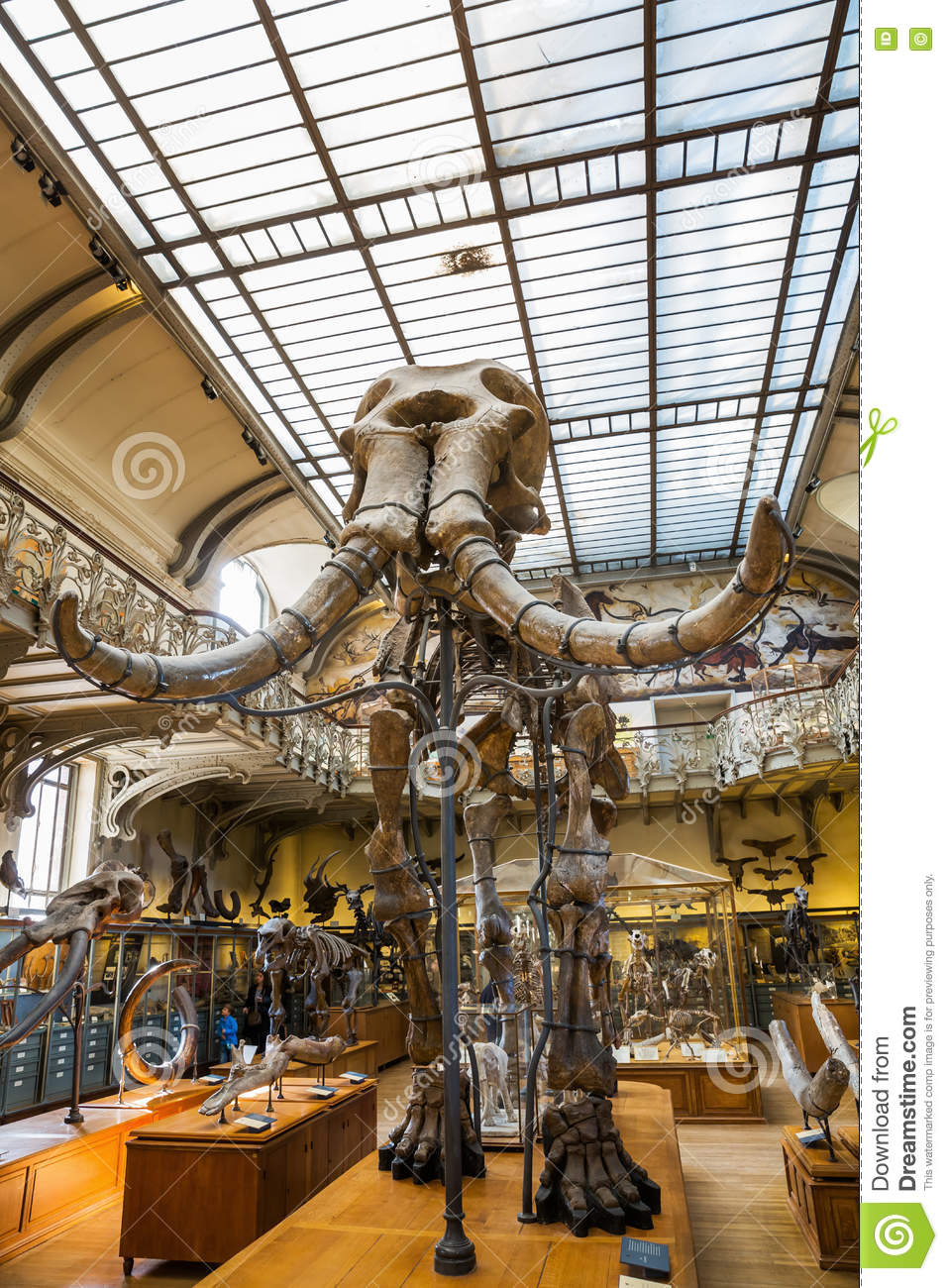 Skeletons Of Animals In The Gallery Of Palaeontology And Comparative
