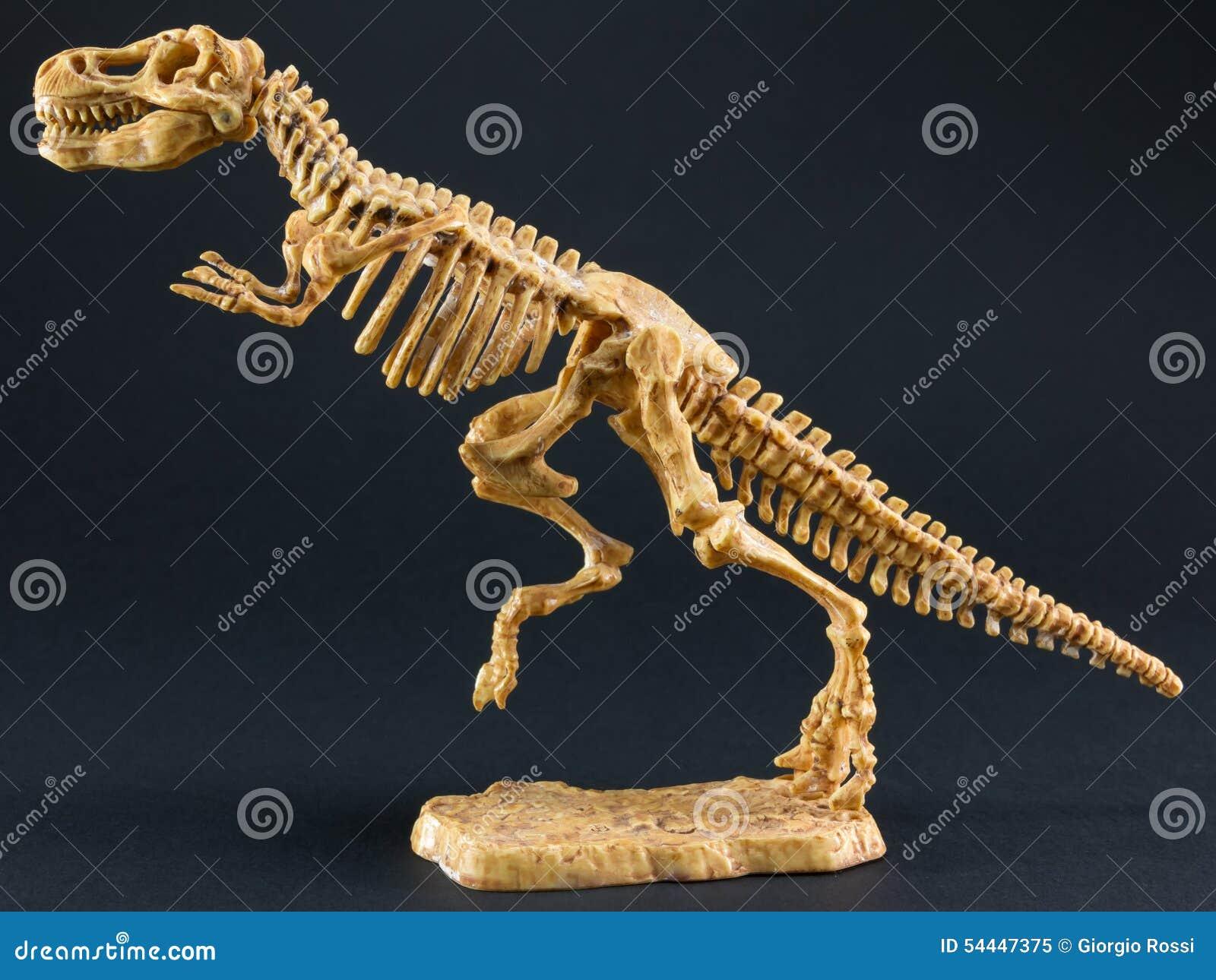 skelett des dinosauriertyrannosaurus t rex auf schwarzem