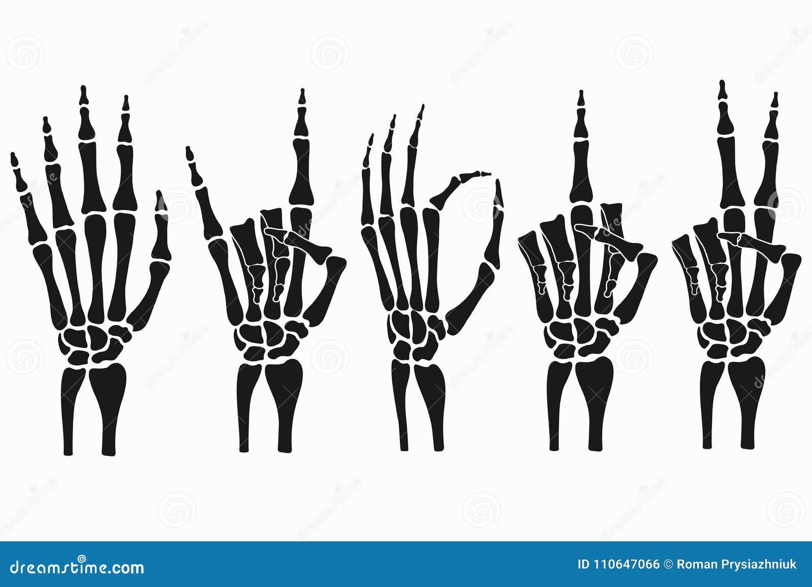 Skelett- uppsättning för handgester Samling av hand-dragit bentecken vektor