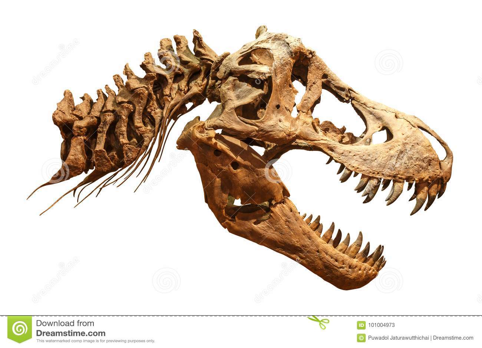 Skelett Von Tyrannosaurus Rex T-rex Auf Lokalisiertem Hintergrund ...