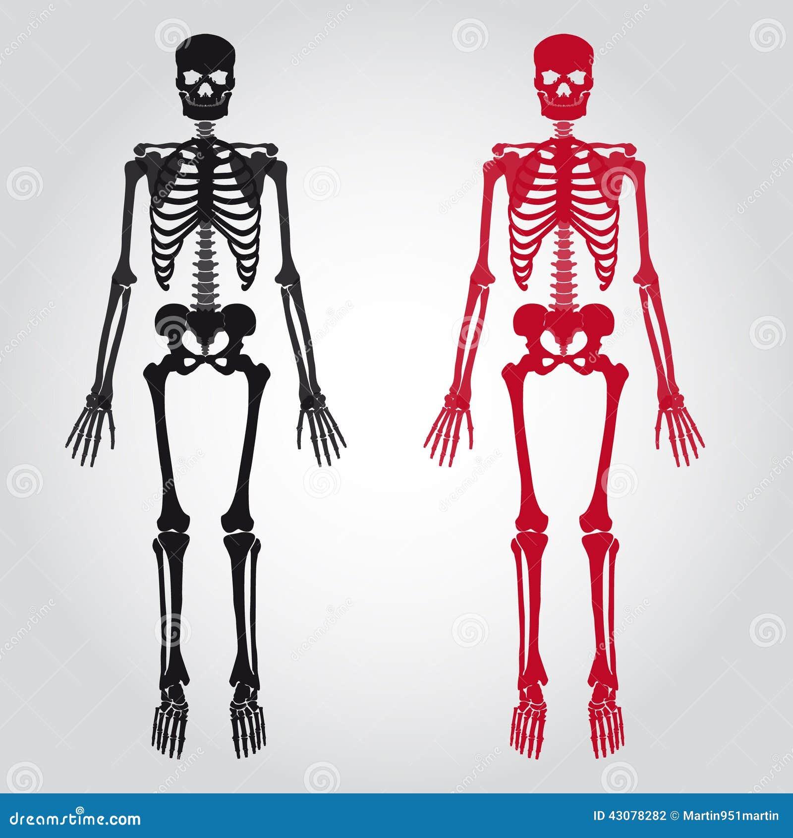 skelette menschliche knochen eingestellt vektor abbildung bild 43078282. Black Bedroom Furniture Sets. Home Design Ideas