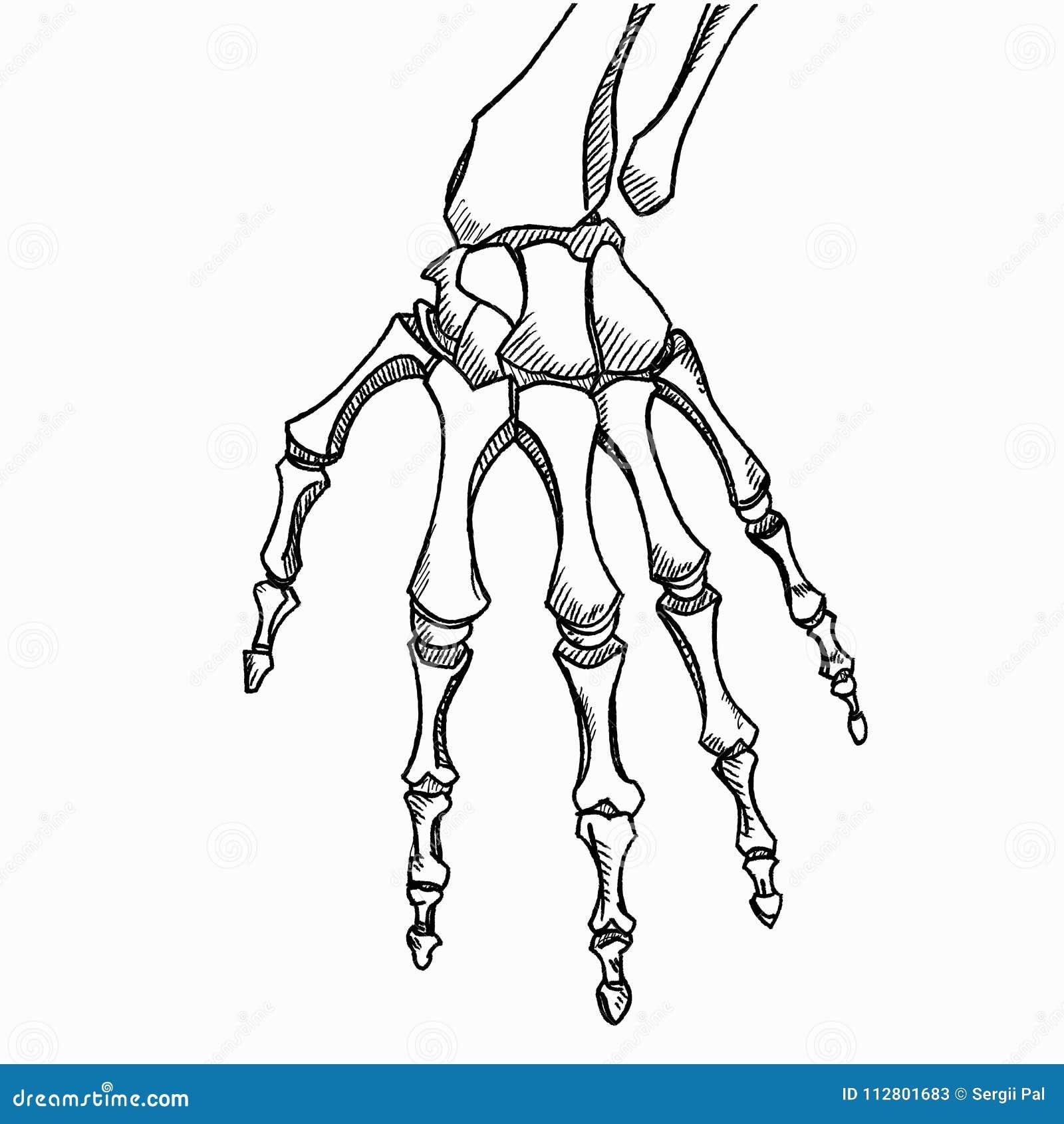 Nett Arm Und Handknochen Fotos - Menschliche Anatomie Bilder ...