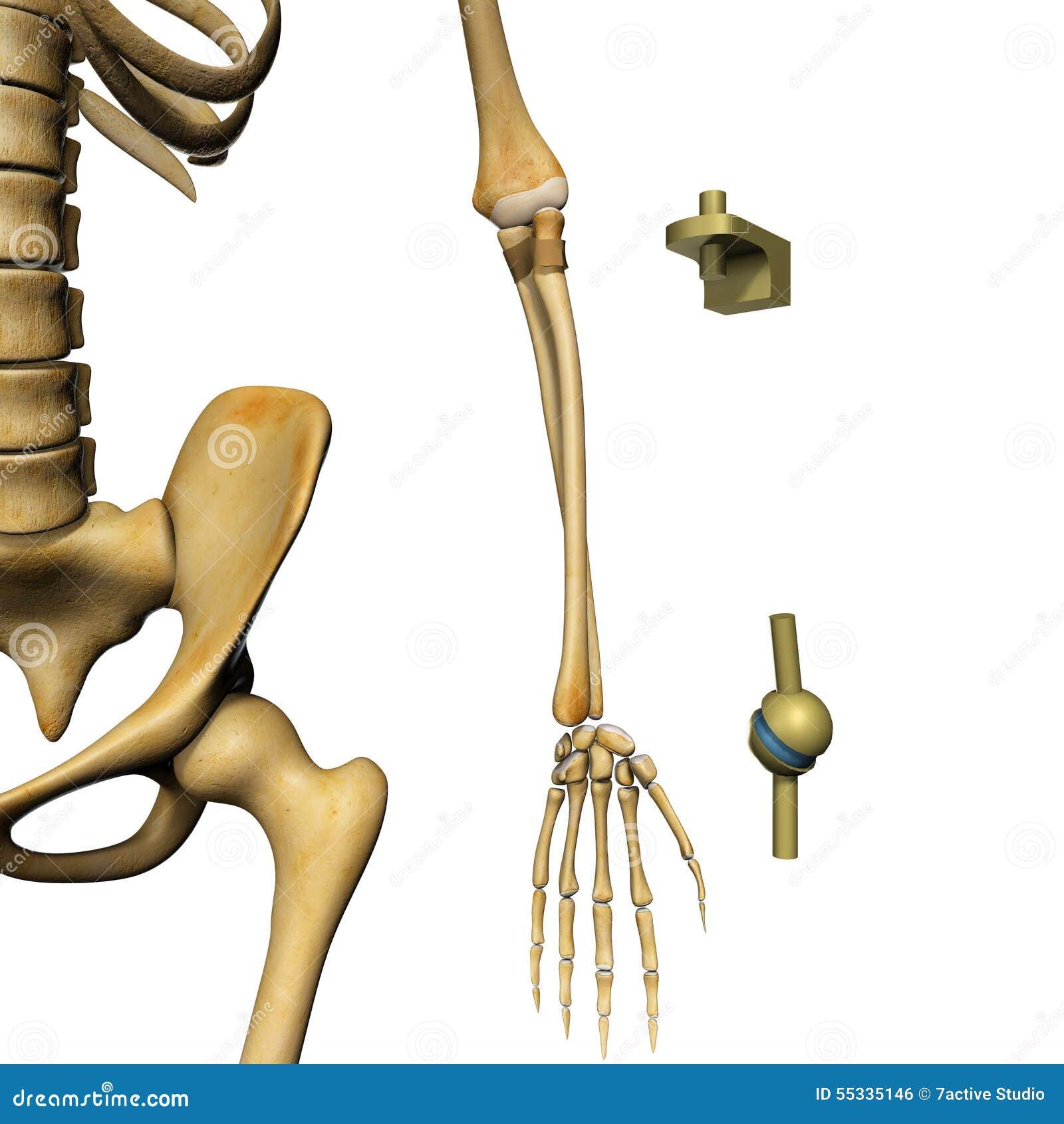 Skeletverbindingen Stock Illustratie Illustratie Bestaande