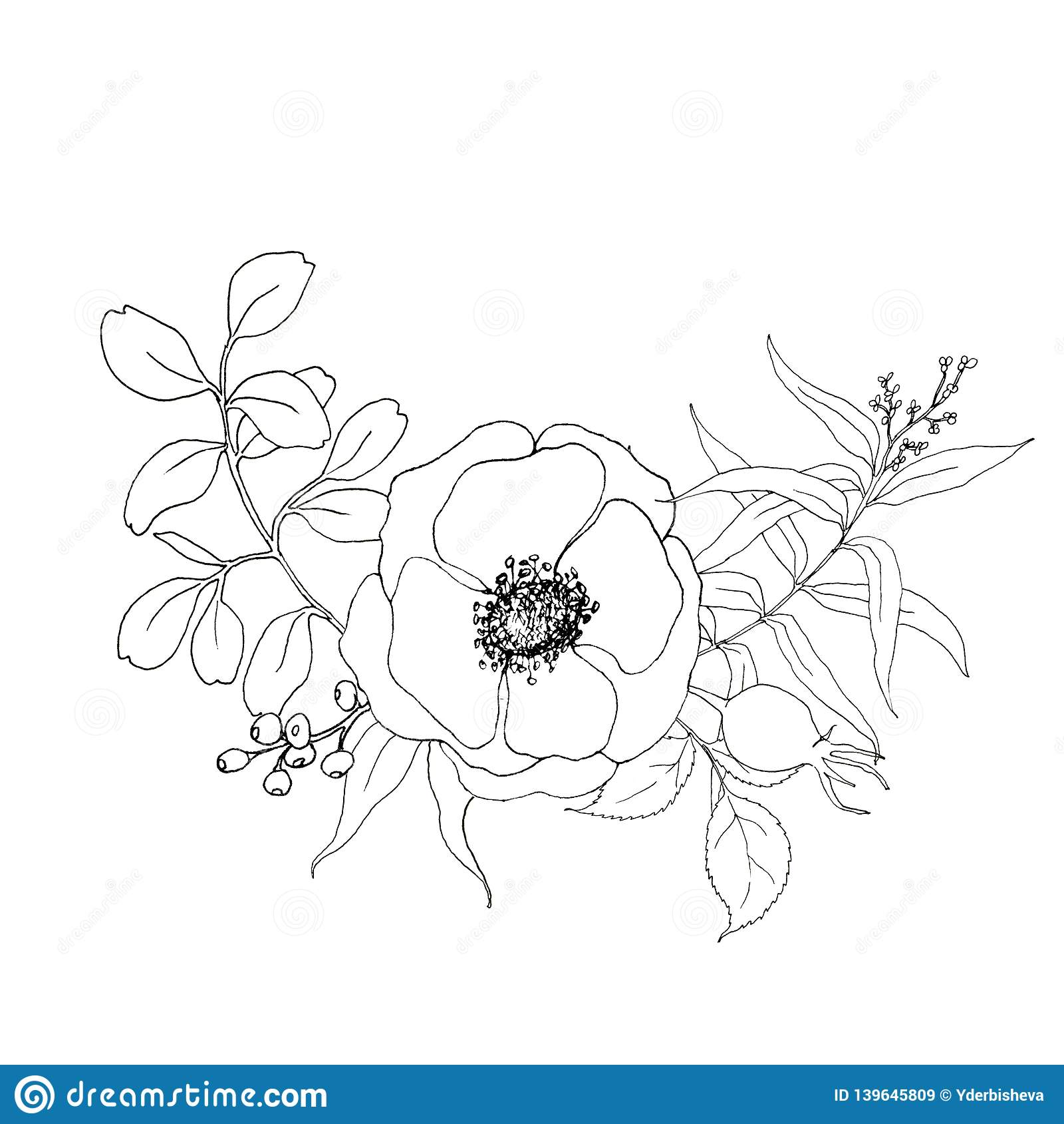 Sketch Anemone And Greenery Bouquet Hand Painted Flowers And Berries With Eucalyptus Leaves And Branch Isolated On Stock Illustration Illustration Of Elegance Design 139645809