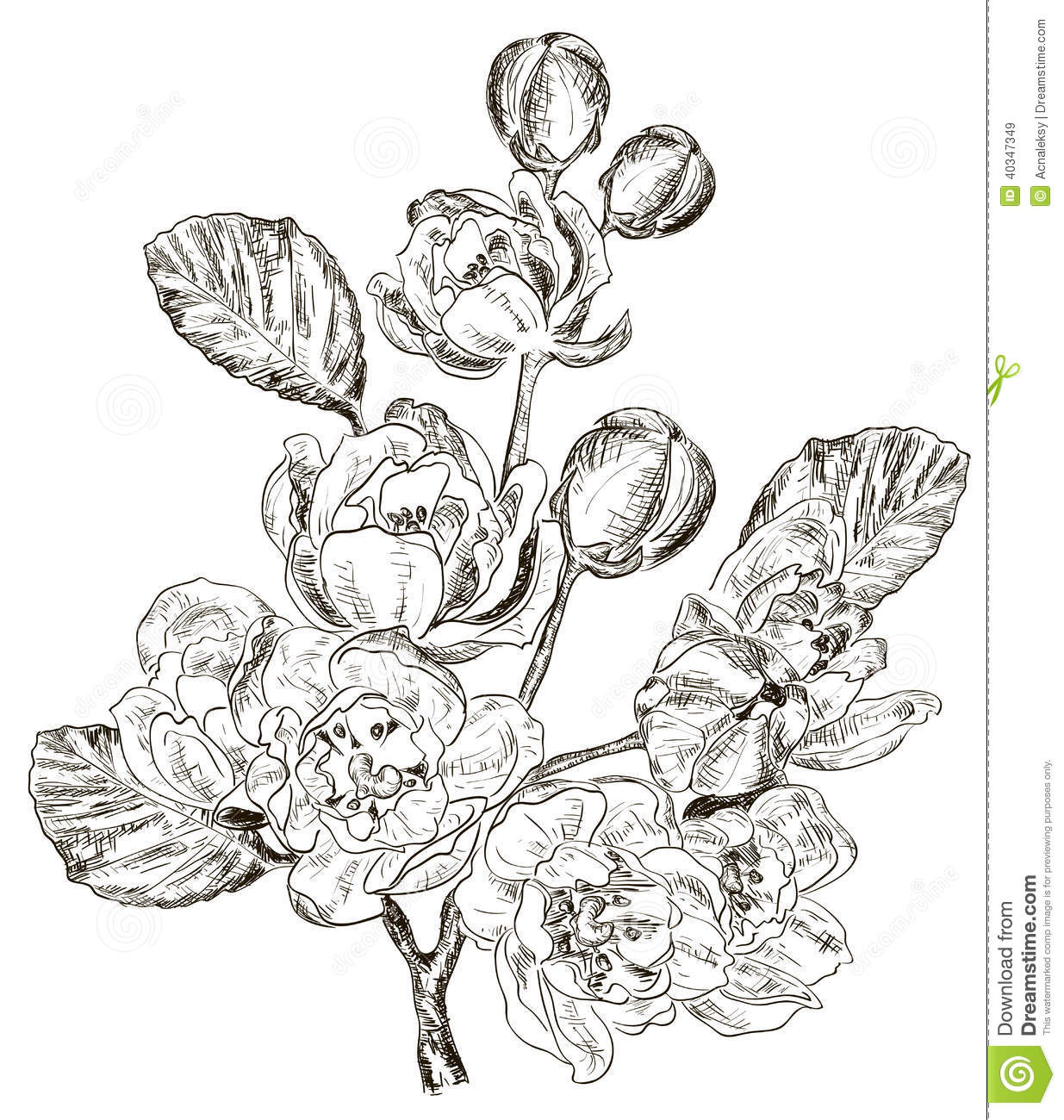 Sketch of branch of spring flower stock vector image for Sketch online free