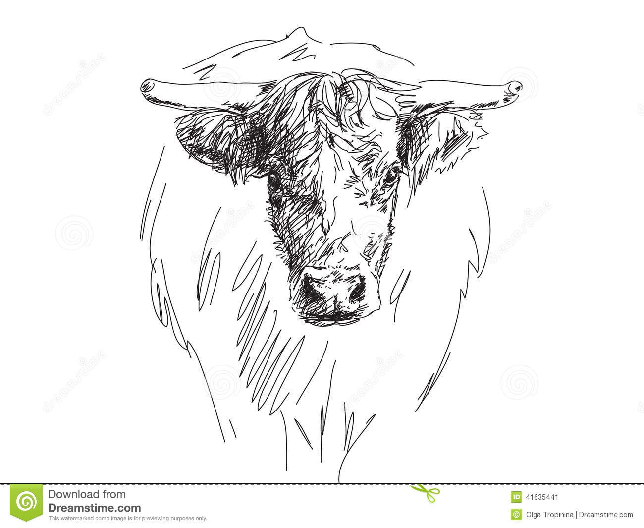 Sketch Of Bull Head Stock Vector - Image: 41635441