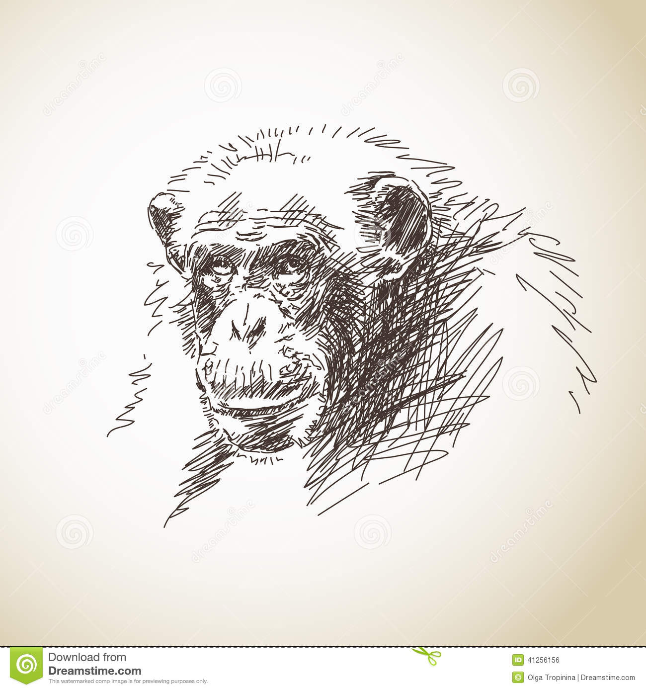 Sketch Of Chimpanzee Stock Vector. Illustration Of Evolution - 41256156