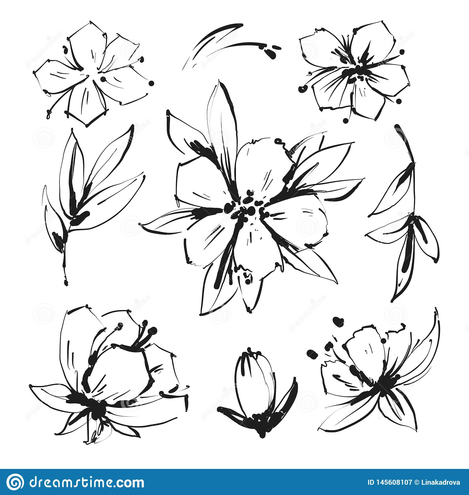 Sketch Floral Botany Collection. Magnolia flower drawings. Black and white with line art on white backgrounds. Hand