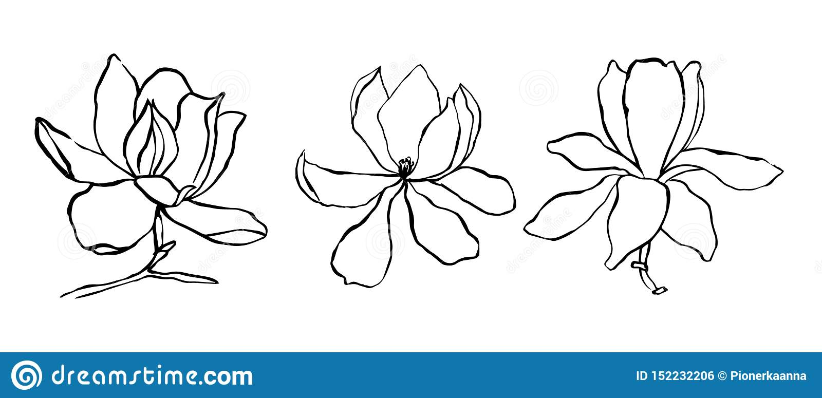 Sketch Floral Botany Collection Magnolia Flower Drawings