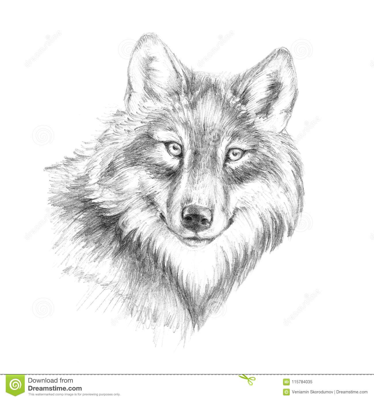 Sketch graphics head of a wolf of black and white pen graphics