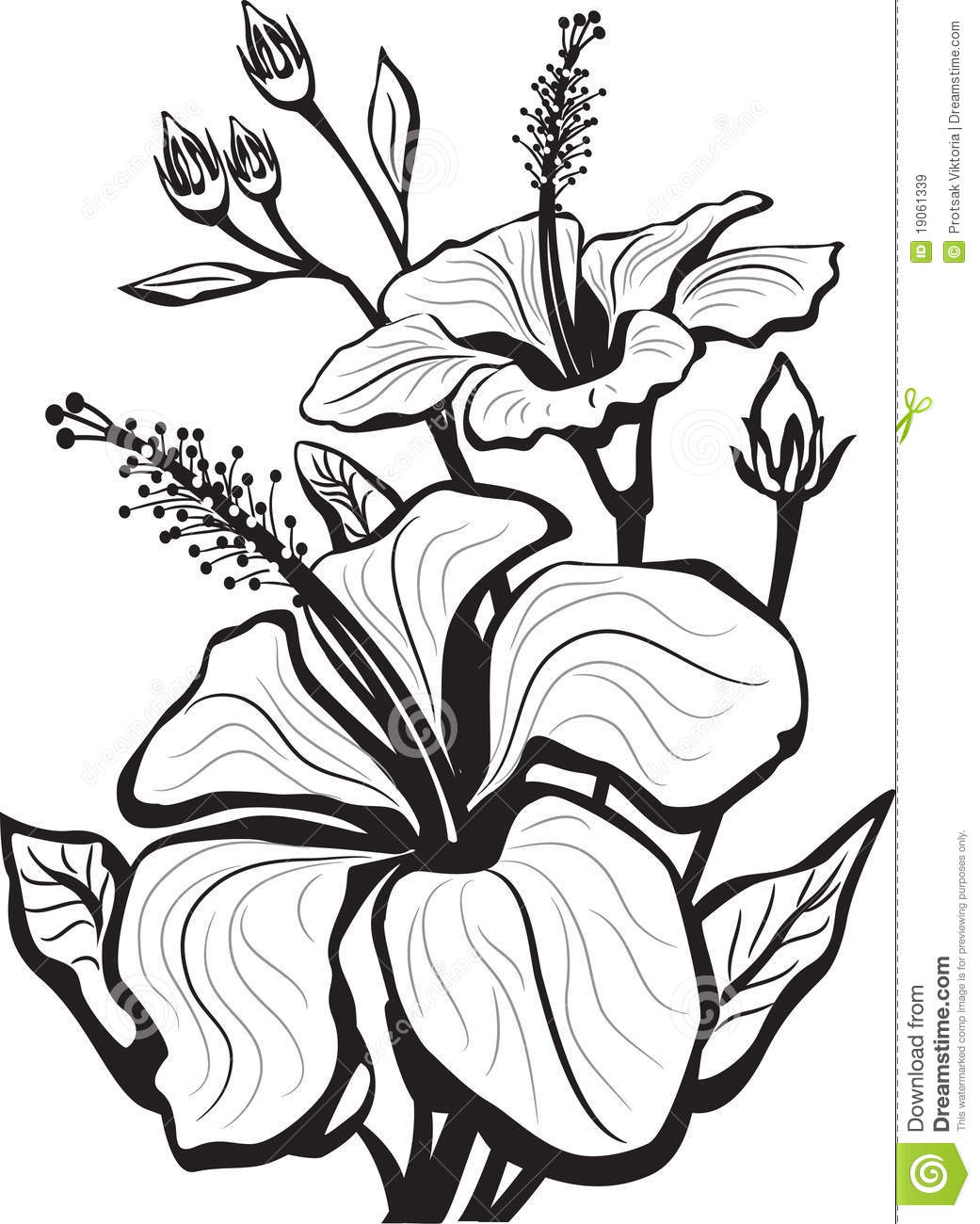 Sketch Of Hibiscus Flowers Royalty Free Stock Images