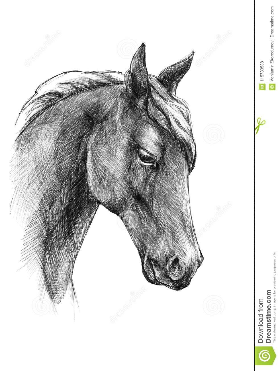 Sketch a horse head black and white drawing stock for Disegno di un cavallo da colorare