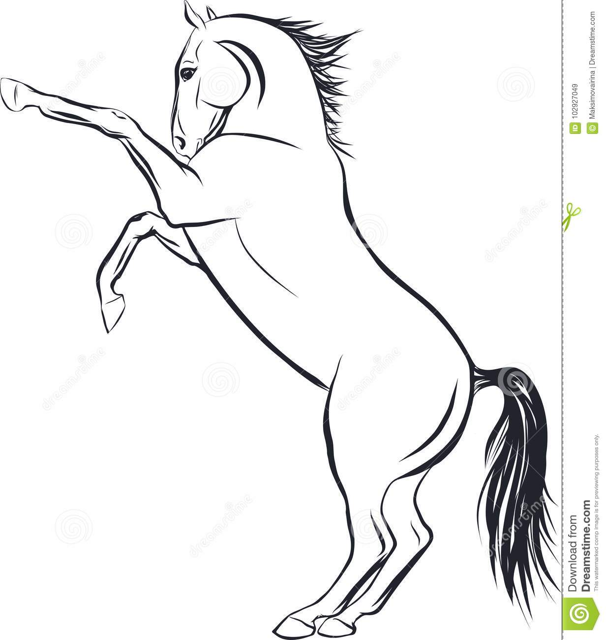 Sketch Of The Horse Standing On Hind Legs Stock Vector Illustration Of Design Nature 102927049