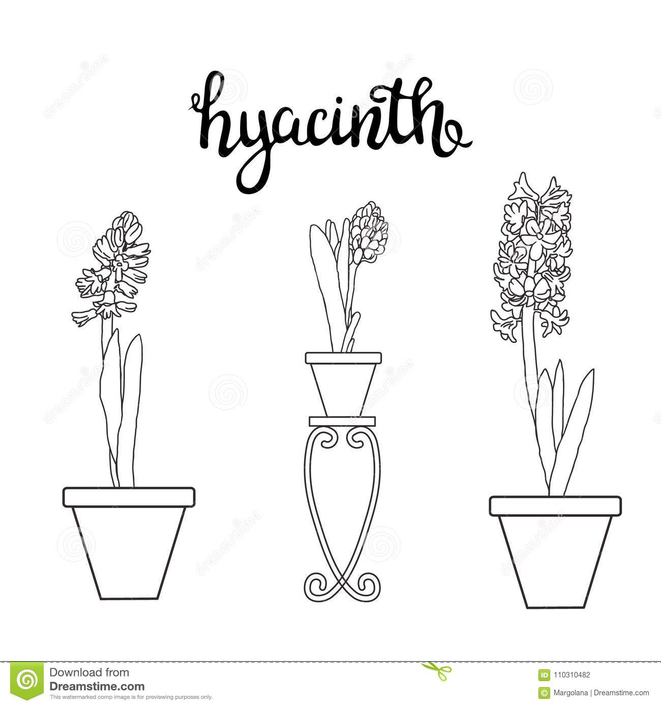 Sketch Hyacinth Spring Flowers And Lettering Stock Vector