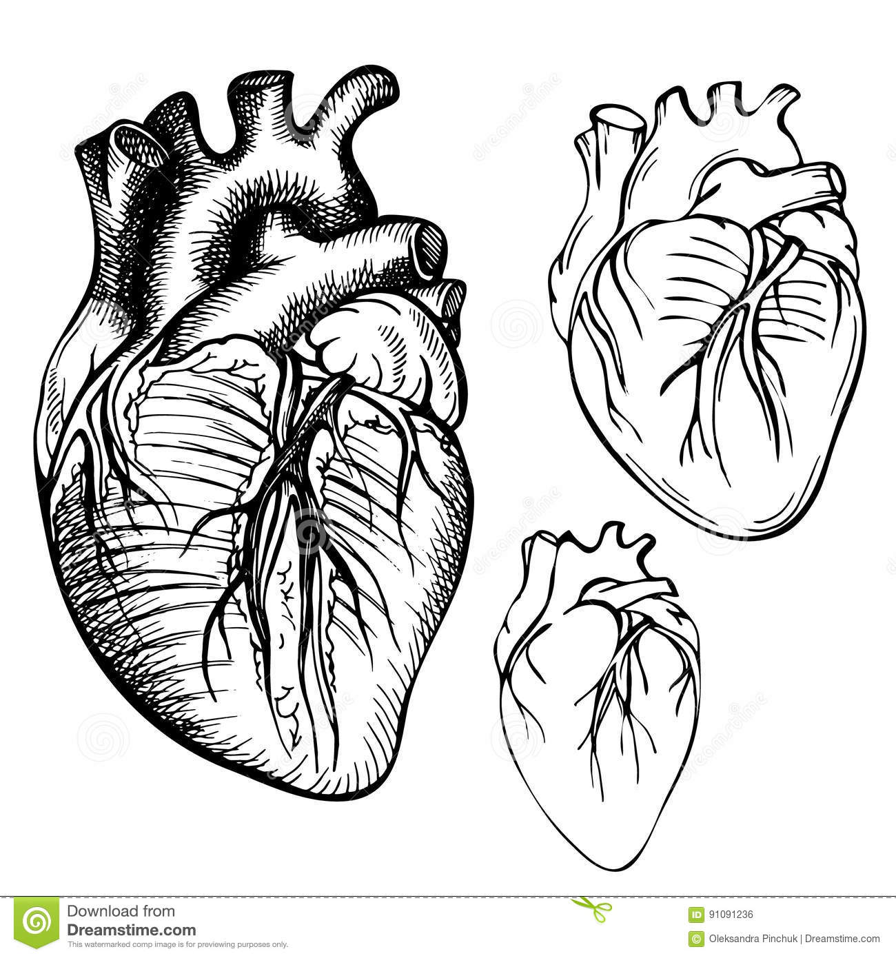 Sketch Ink Human Heart Engraved Anatomical Heart Illustration Stock