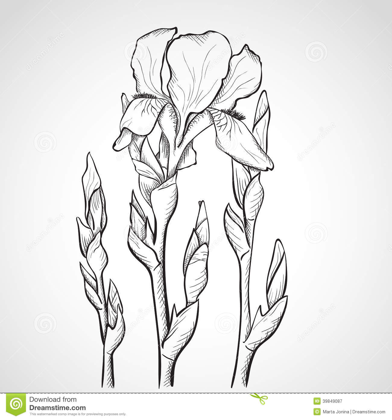 Hand drawing flower stock vector illustration of flower 29601698 sketch iris flowers royalty free stock photography izmirmasajfo