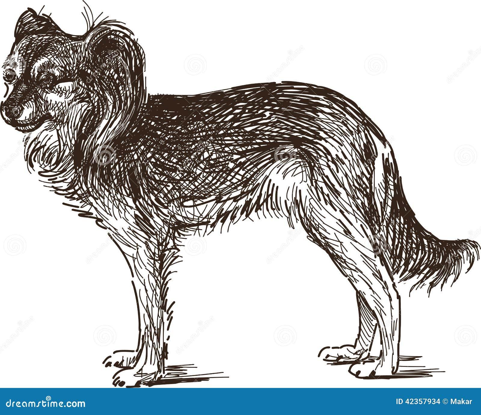 Sketch of lap dog